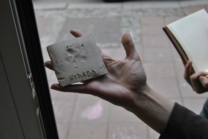 Трагови ноктића одају власницу, мацу занимљивог имена Фото: Милош Старчевић, Београдске.рс